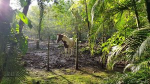 Guided Trails Costa Rica (11)