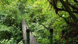 Guided Trails Costa Rica (12)