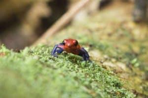 Guided Trails Costa Rica (2)
