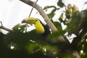 Guided Trails Costa Rica (3)