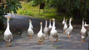 Guided Trails Costa Rica (7)